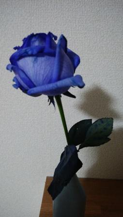 バラ青い.jpg